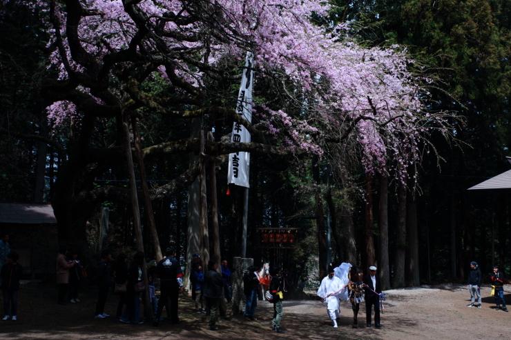 龍の晴れ舞台 ~某所・龍の桜~_d0349418_21362852.jpg