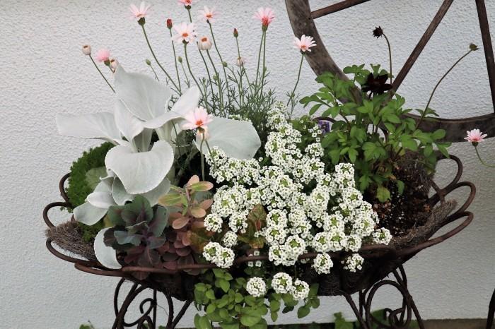 イングリッシュガーデンの花々_d0150720_17400948.jpg