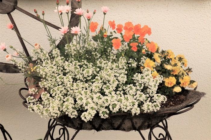 イングリッシュガーデンの花々_d0150720_17403421.jpg