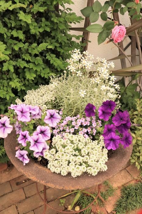 イングリッシュガーデンの花々_d0150720_17405444.jpg