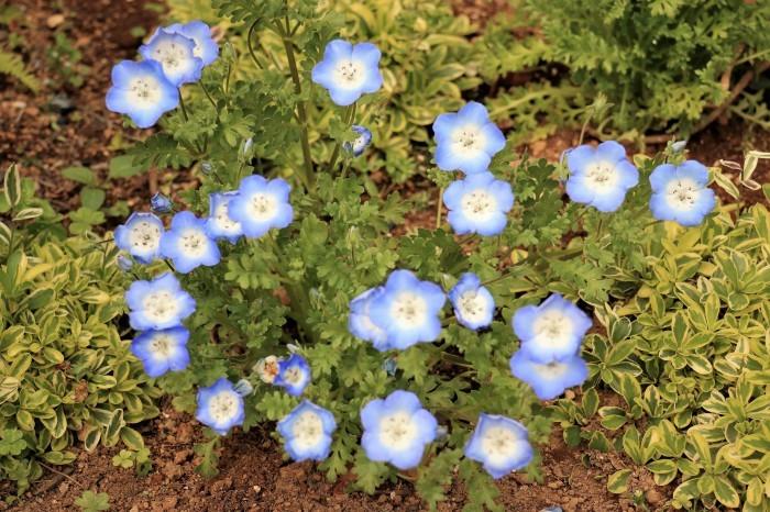 イングリッシュガーデンの花々_d0150720_17421020.jpg