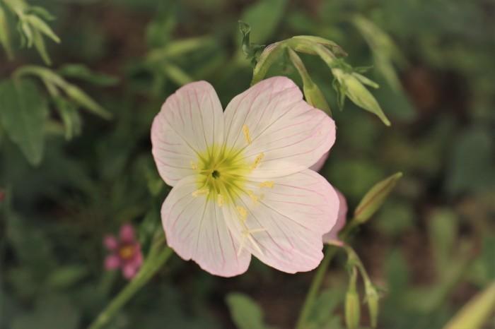 イングリッシュガーデンの花々_d0150720_17432453.jpg