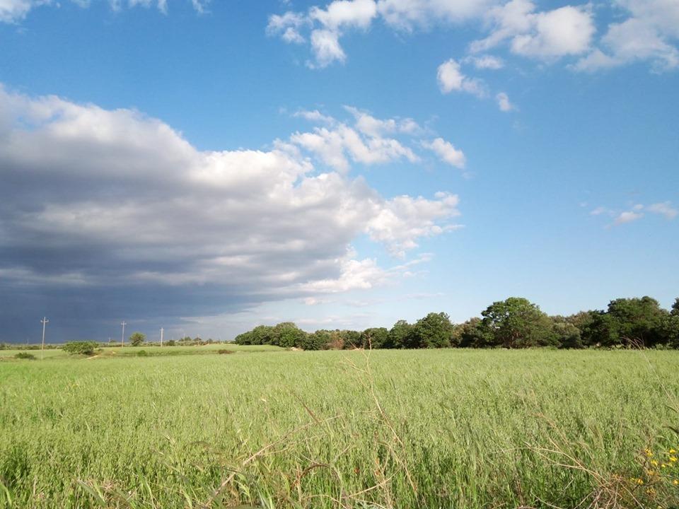 小麦畑と空_b0305039_18141392.jpg