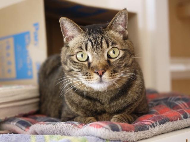 猫のお留守番 ララちゃん編。_a0143140_23222532.jpg