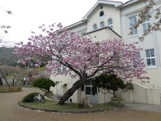 函館公園ニュース  5月6日(月)_e0145841_11535168.jpg