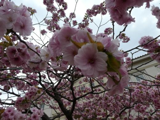 函館公園ニュース  5月6日(月)_e0145841_11535739.jpg