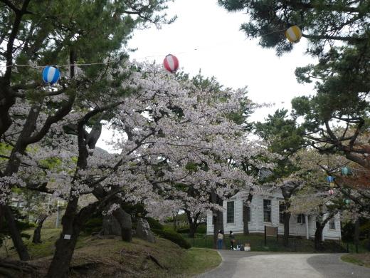 函館公園ニュース  5月6日(月)_e0145841_11541578.jpg
