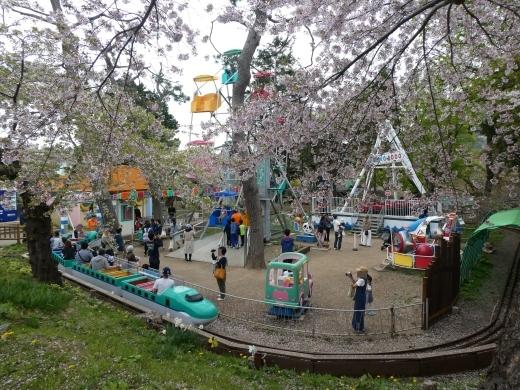 函館公園ニュース  5月6日(月)_e0145841_11542826.jpg