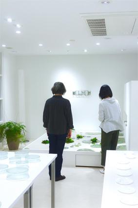 「 松山美恵 植物を楽しむためのガラス展 」 ~ LIFE DESIGN STUDIO 5月展_d0217944_10025097.jpg