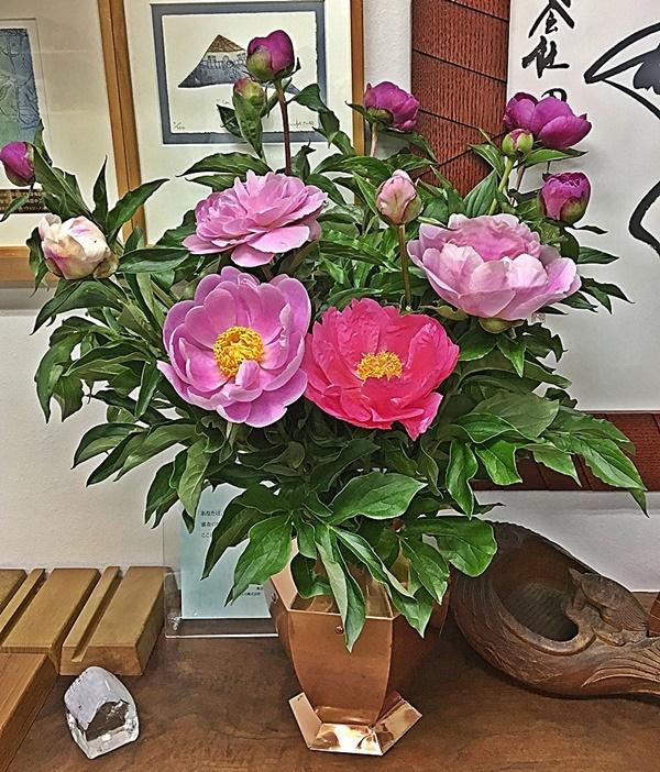 芍薬の花_c0019551_18243965.jpg