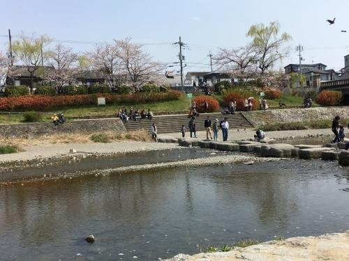 京都の旅\'19Ⅲ 京都桜旅その3_e0326953_23214643.jpg