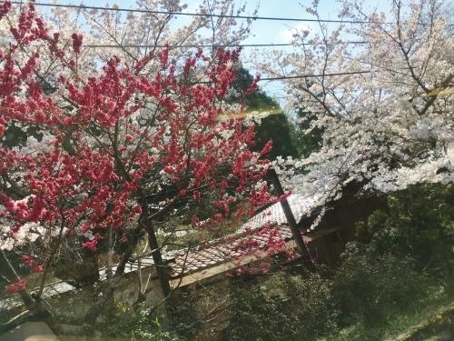 京都の旅\'19Ⅲ 京都桜旅その3_e0326953_23222550.jpg