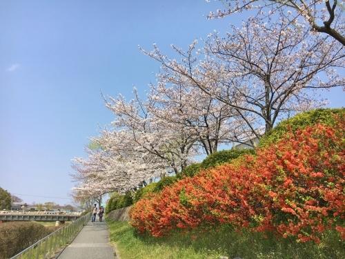 京都の旅\'19Ⅲ 京都桜旅その3_e0326953_23234929.jpg