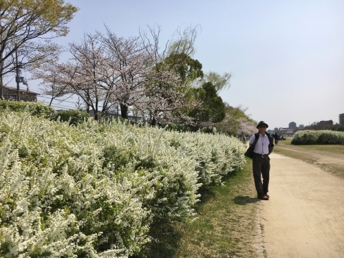 京都の旅\'19Ⅲ 京都桜旅その3_e0326953_23250479.jpg