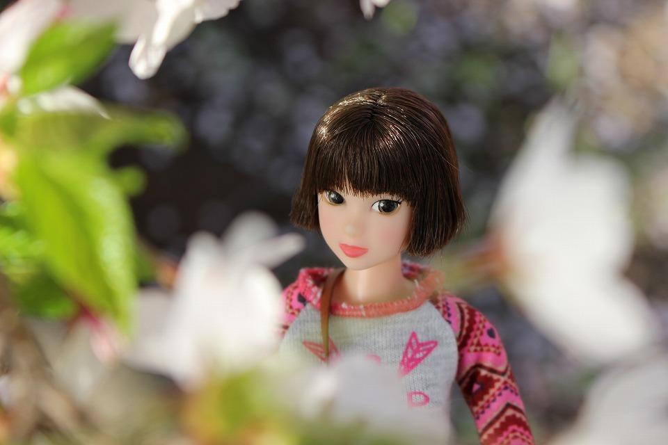 今年の一本桜_c0335355_16435208.jpg