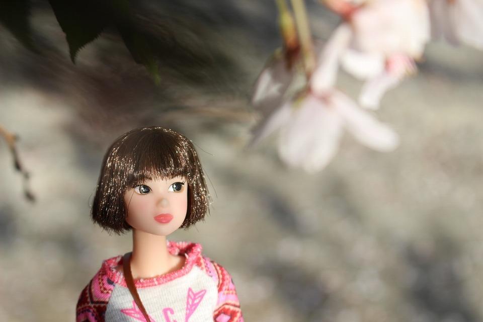 今年の一本桜_c0335355_16445105.jpg