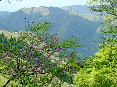 金剛山は二輪草が満開でした♪_b0194861_22055835.jpg