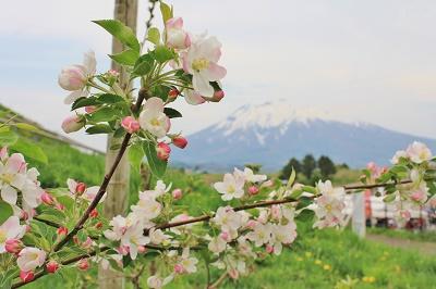 「りんご花まつり2019」開幕!_d0131668_16193294.jpg