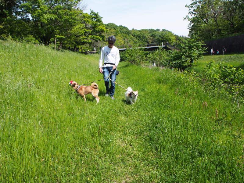 都立野川公園_b0246876_21493789.jpg