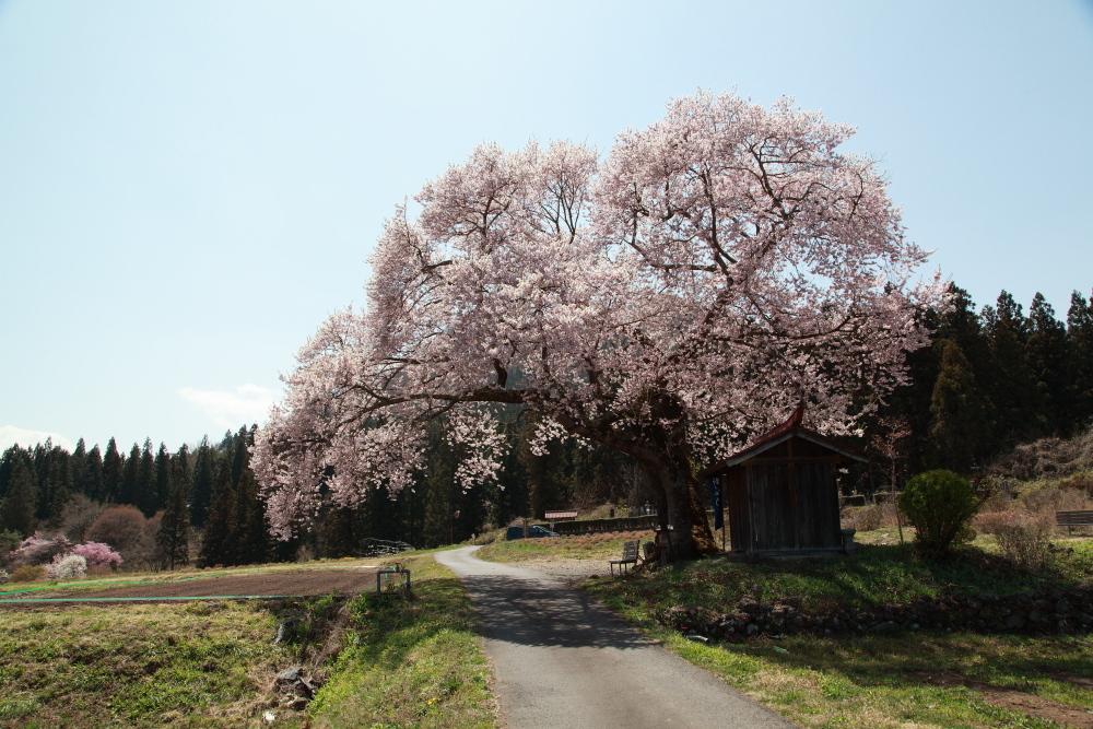 今年を振り返る 4月・群馬桜巡り_e0165983_10421649.jpg