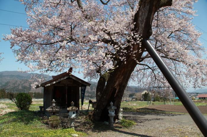 水上町 一宮地蔵尊の一本桜_e0165983_10423251.jpg