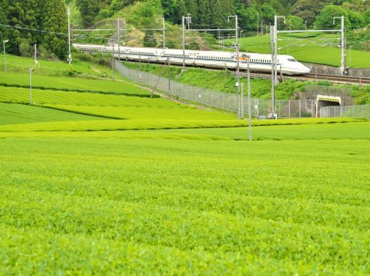 新幹線と茶畑_f0266284_14054244.jpg