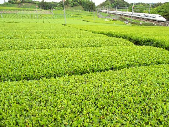 新幹線と茶畑_f0266284_14060597.jpg