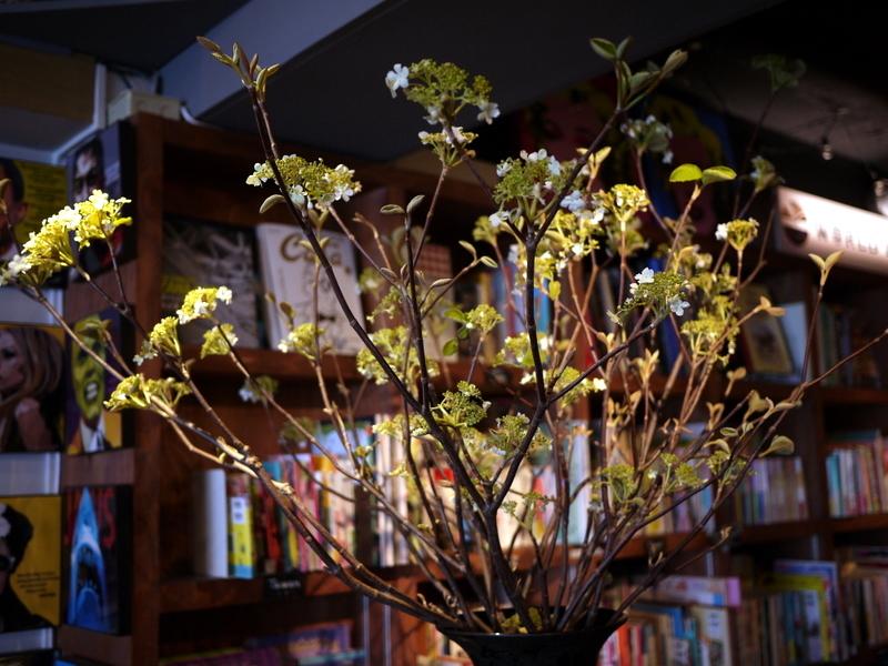 今週のWORLD BOOK CAFEさんは「ピラカンサス」。2019/05/04。_b0171193_00235660.jpg