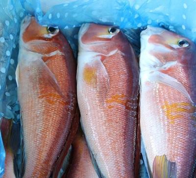おいしい魚料理_a0333195_14002277.jpg