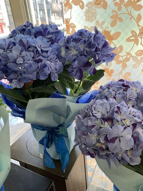 絞り紫陽花『水色の恋』_b0196913_16430363.jpeg