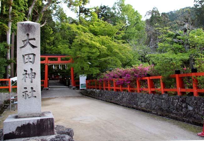 太田神社 カキツバタが盛り_e0048413_21172399.jpg