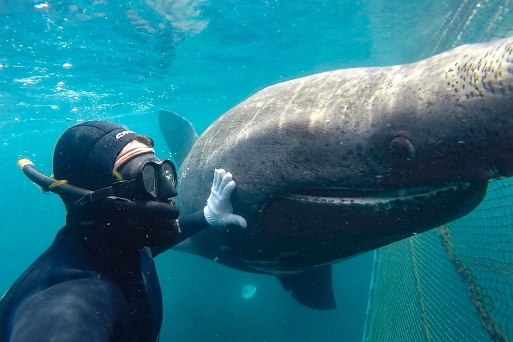 Basking Shark_d0113817_03415954.jpeg