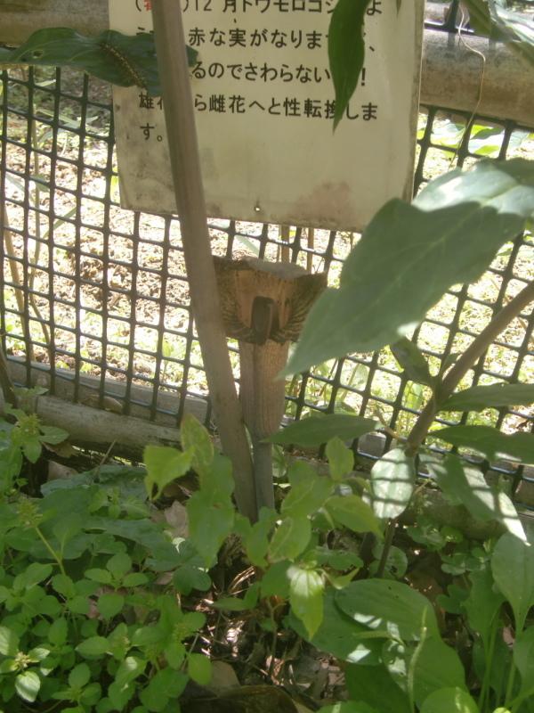 令和:初活動日「展望台周辺草刈り」・・・孝子の森_c0239329_20301969.jpg