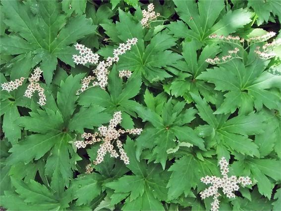 植栽のリニューアルと春の野草_f0045132_09185085.jpg
