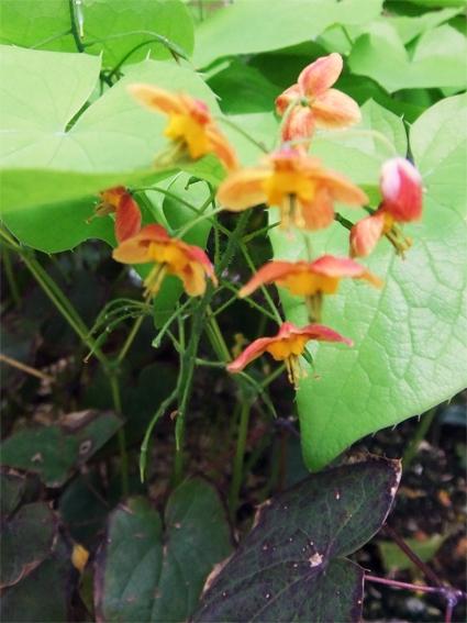 植栽のリニューアルと春の野草_f0045132_09185636.jpg