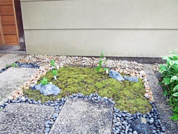 植栽のリニューアルと春の野草_f0045132_09190284.jpg