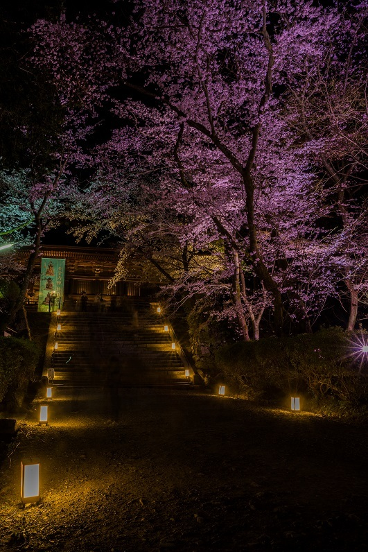 2019滋賀桜~三井寺ライトアップ_e0363038_09172598.jpg