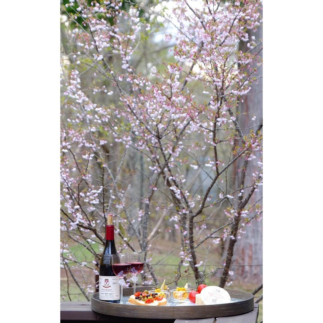 富士桜の下で…_a0335867_12161884.jpeg