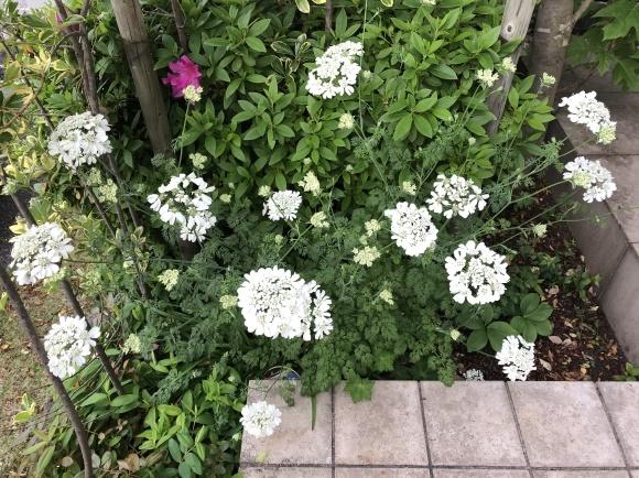 オルレアと春の花_c0248269_19254323.jpg