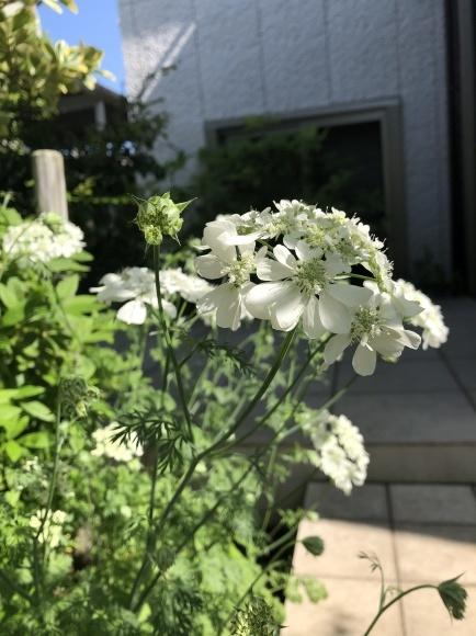 オルレアと春の花_c0248269_19261538.jpg