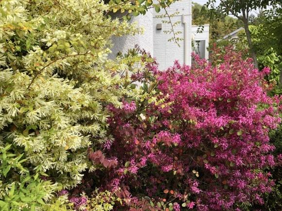 オルレアと春の花_c0248269_19274202.jpg