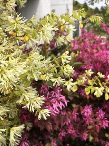 オルレアと春の花_c0248269_19275170.jpg