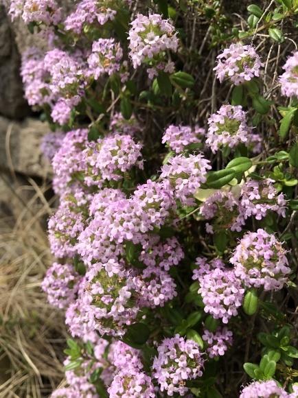 オルレアと春の花_c0248269_19280021.jpg