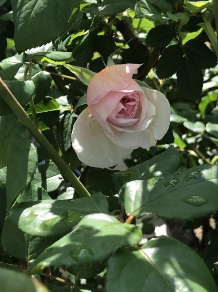 オルレアと春の花_c0248269_19284116.jpg