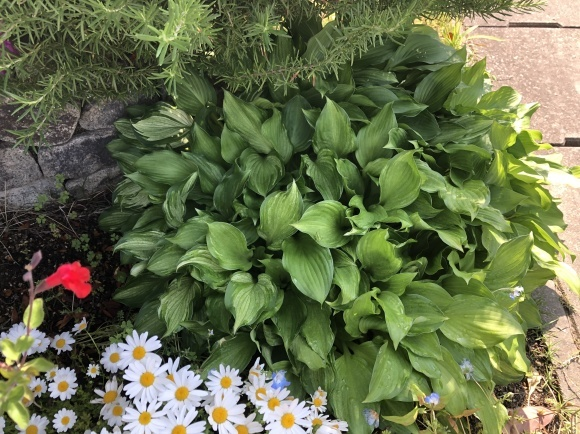 オルレアと春の花_c0248269_19353815.jpg
