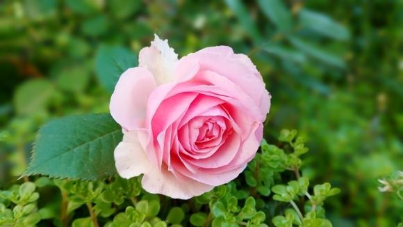 あなたが咲かせていくもの***_e0290872_07410568.jpg