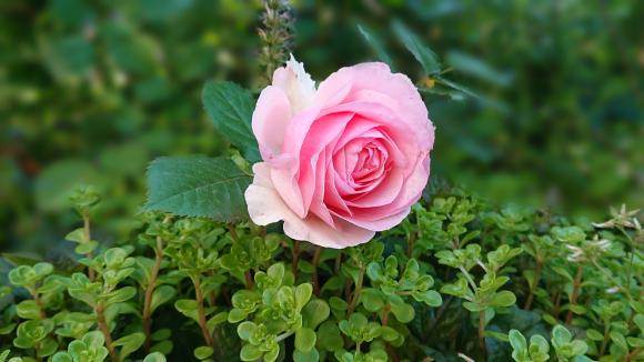 あなたが咲かせていくもの***_e0290872_07420274.jpg