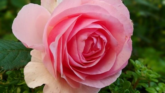 あなたが咲かせていくもの***_e0290872_07421736.jpg