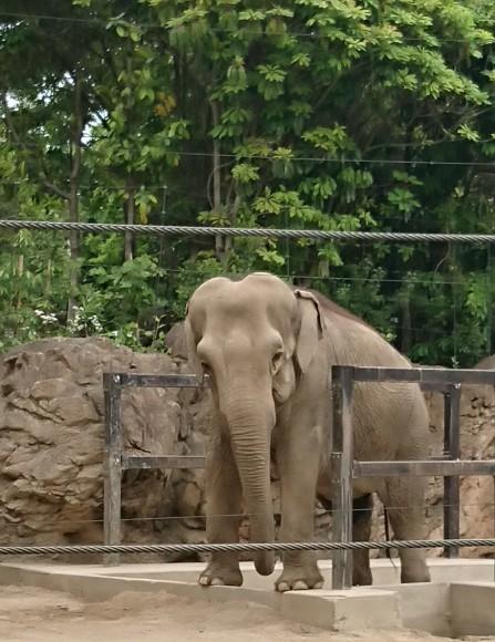 動物園に ☆_a0349374_14322778.jpg