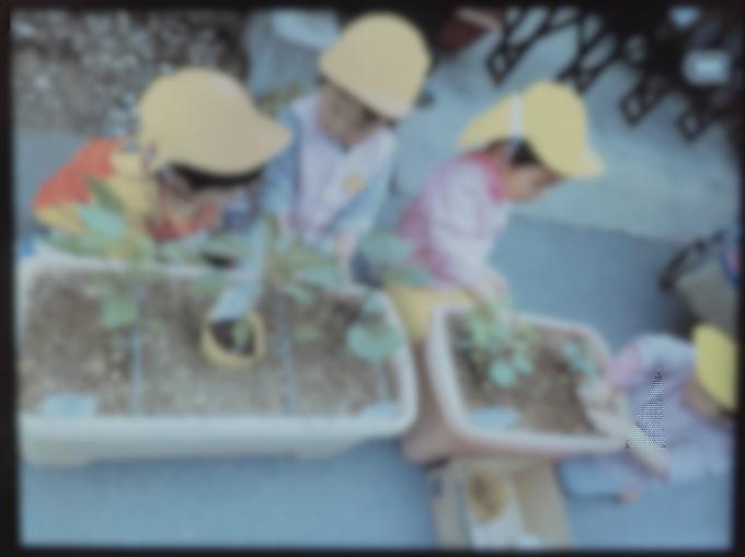 保育の様子♪ ホールクラス  野菜苗、種植えをしました!_c0293682_23000656.jpg